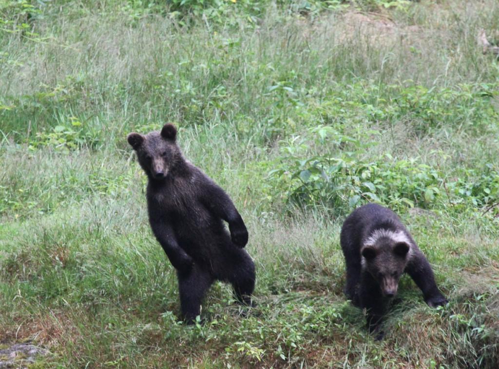 4-mladata-sa-zdrzuju-osamotene-nedaleko-od-medvedov