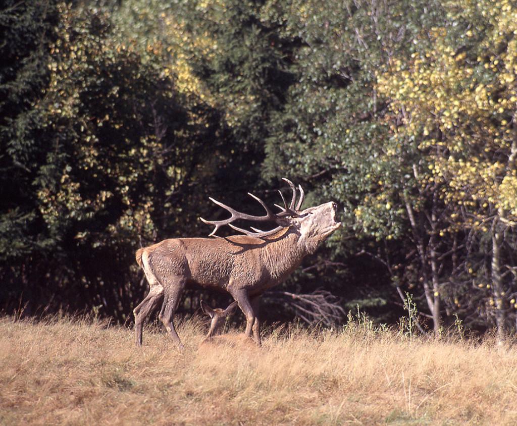 14-po-druhej-vyzve-sa-z-druheho-kopca-ozval-druhy-jelen