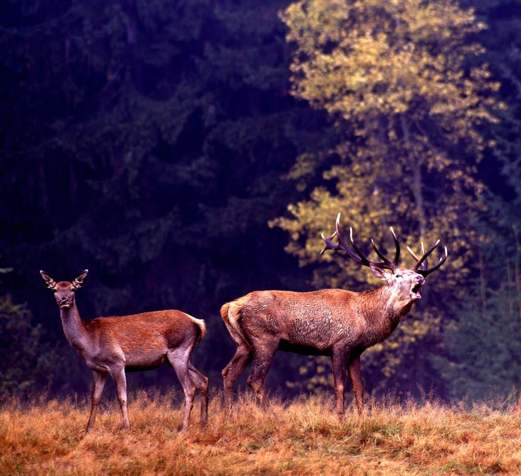 20-nad-ranom-mal-hlavne-slovo-jelen-oproti-posedu